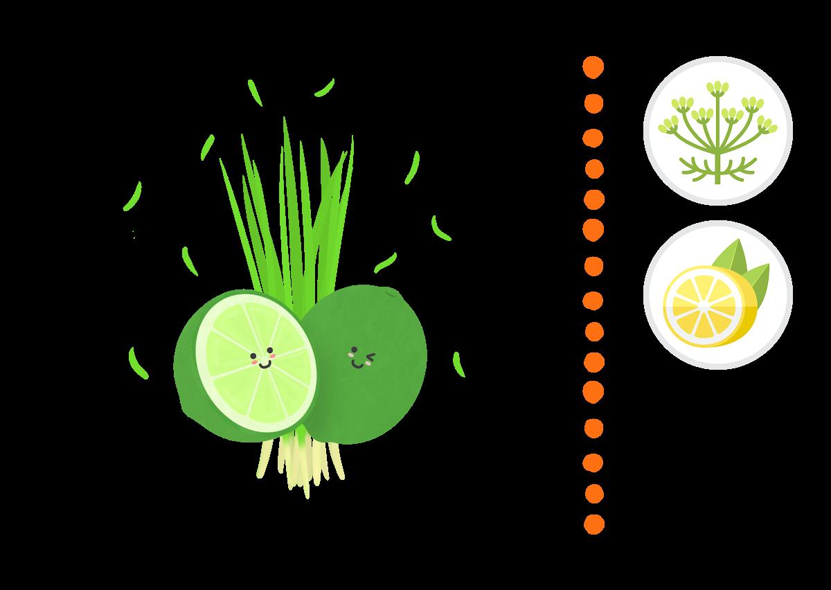 Vetiver & Lime